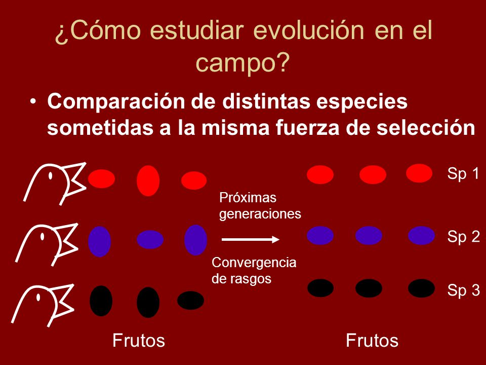 ¿Cómo estudiar evolución en el campo