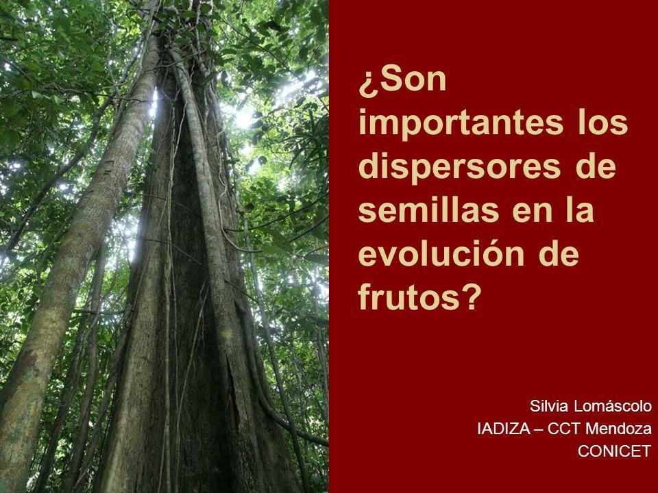 ¿Son importantes los dispersores de semillas en la evolución de frutos