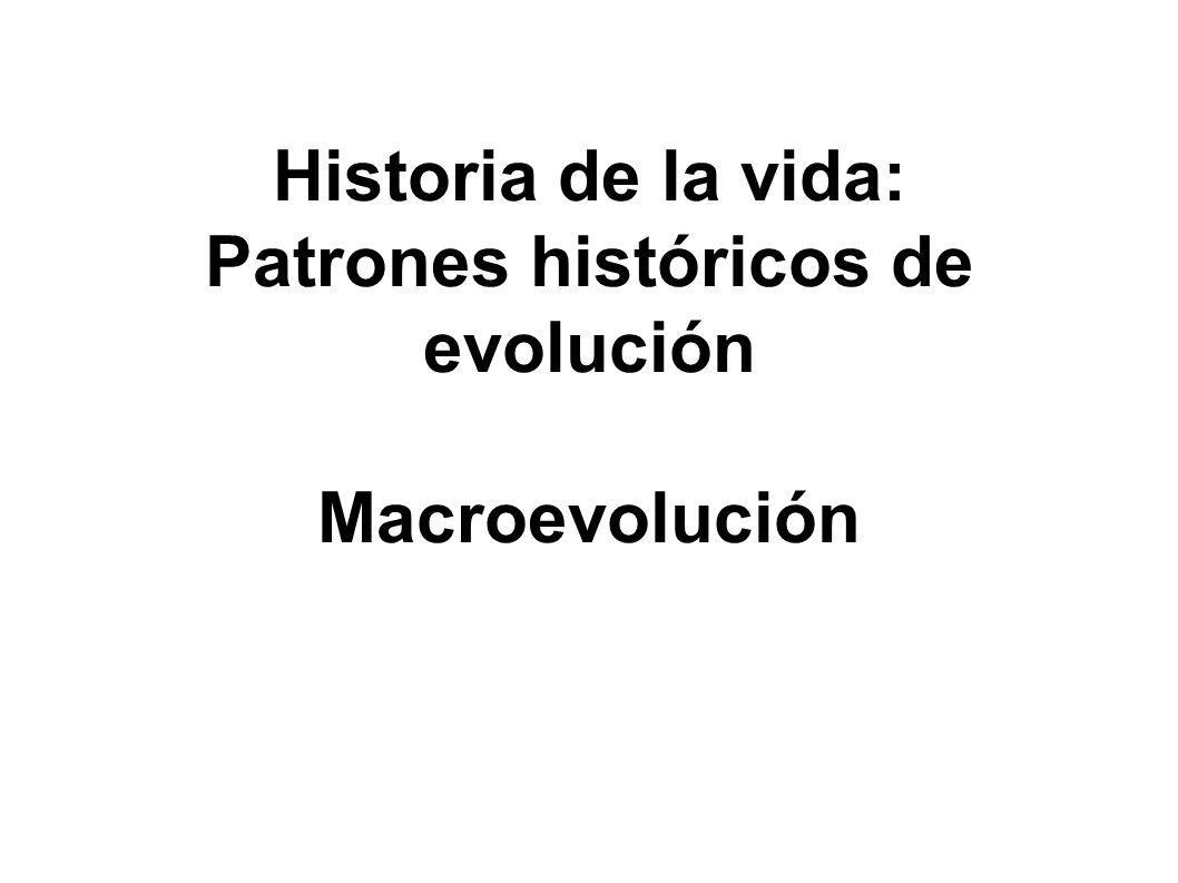 Patrones históricos de evolución