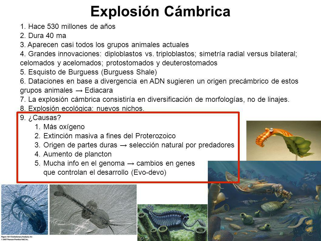 Explosión Cámbrica Hace 530 millones de años Dura 40 ma