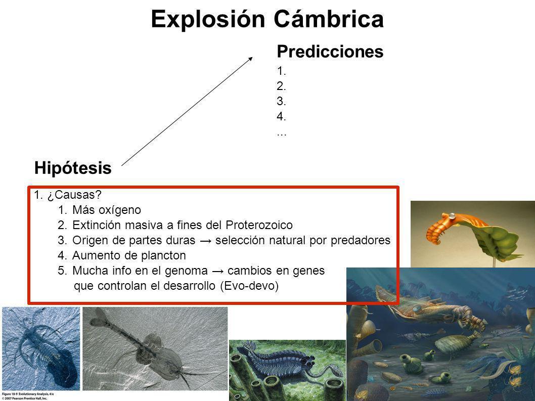 Explosión Cámbrica Predicciones Hipótesis 1. 2. 3. 4. ... ¿Causas
