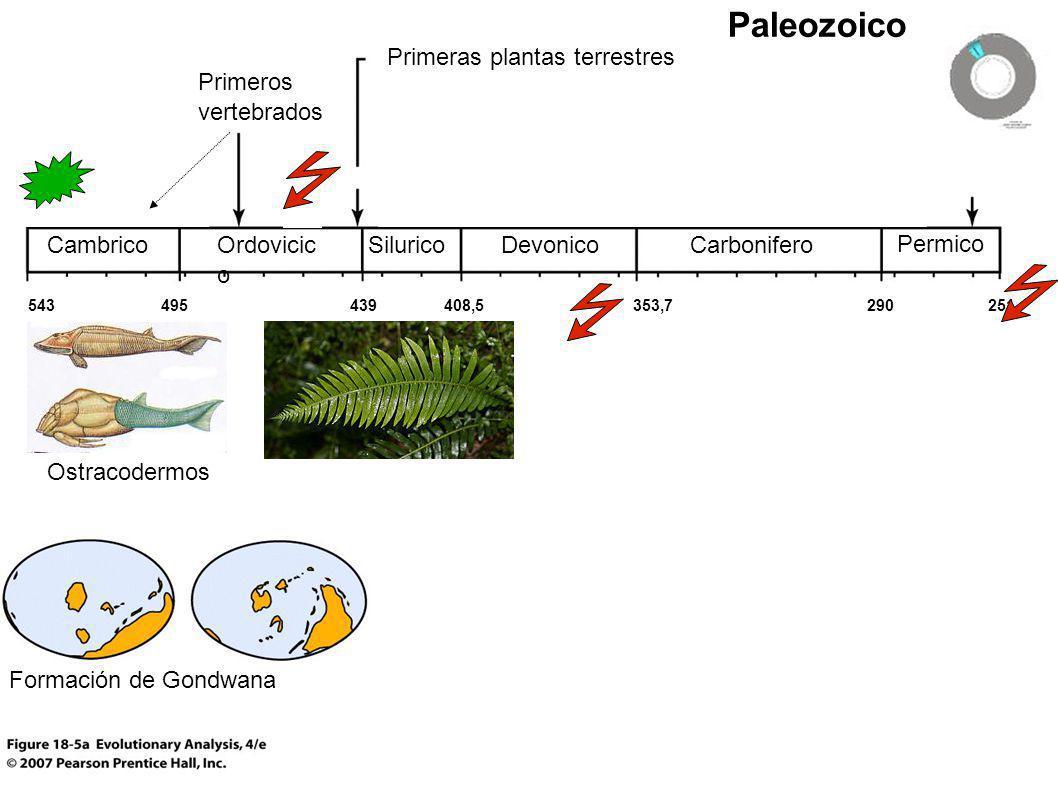 Paleozoico Primeras plantas terrestres Primeros vertebrados Cambrico