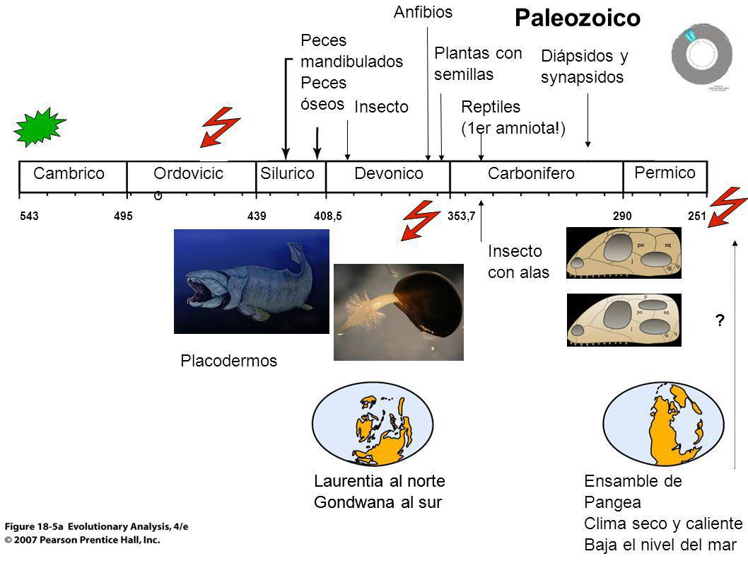 Paleozoico Anfibios Peces mandibulados Peces óseos Plantas con