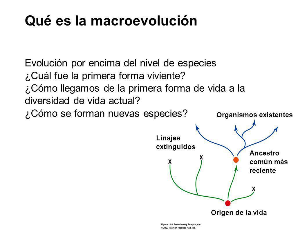 Qué es la macroevolución