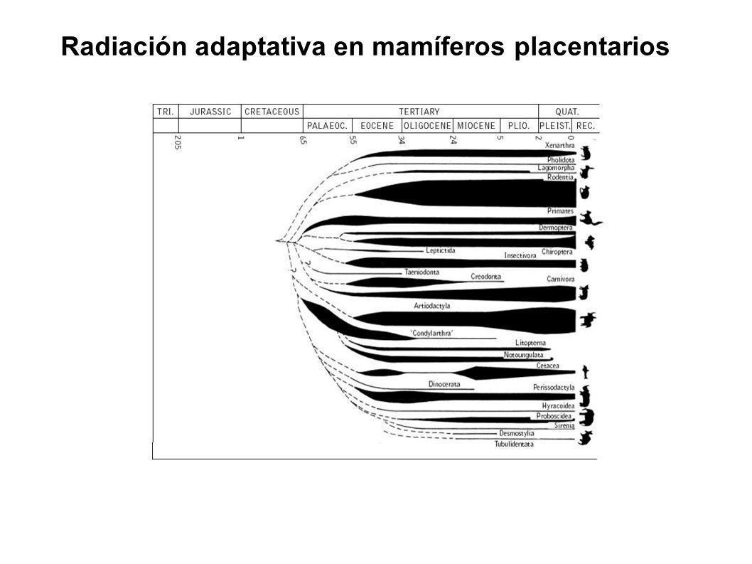 Radiación adaptativa en mamíferos placentarios