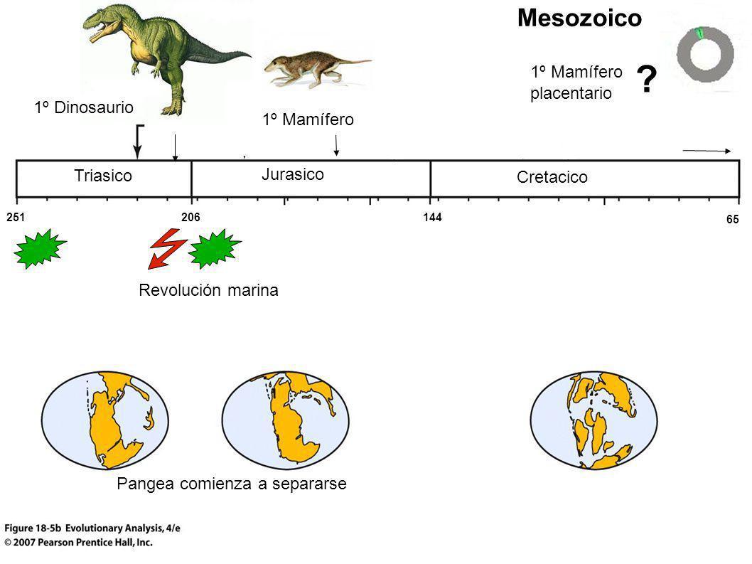 Mesozoico 1º Mamífero placentario 1º Dinosaurio 1º Mamífero Triasico