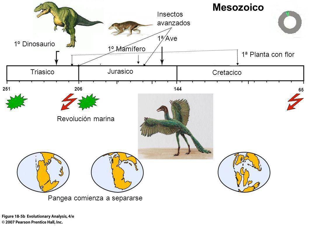 Mesozoico Insectos avanzados 1ª Ave 1º Dinosaurio 1º Mamífero
