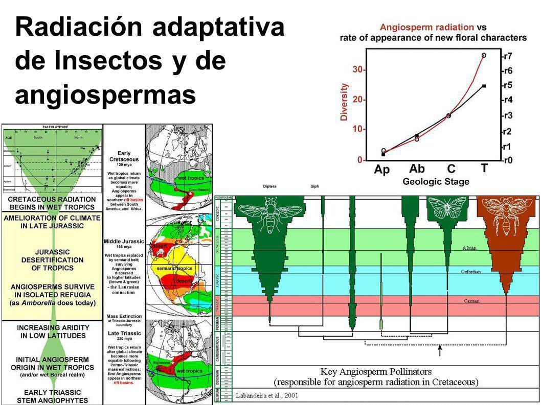 Radiación adaptativa de Insectos y de angiospermas