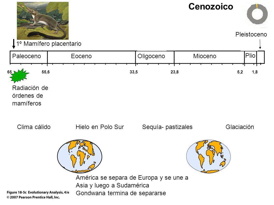 Cenozoico Pleistoceno 1º Mamífero placentario Paleoceno Eoceno
