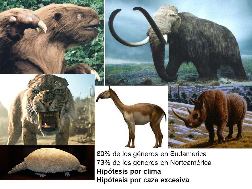 80% de los géneros en Sudamérica