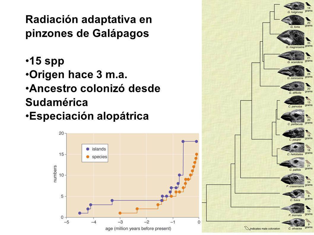 Radiación adaptativa en pinzones de Galápagos