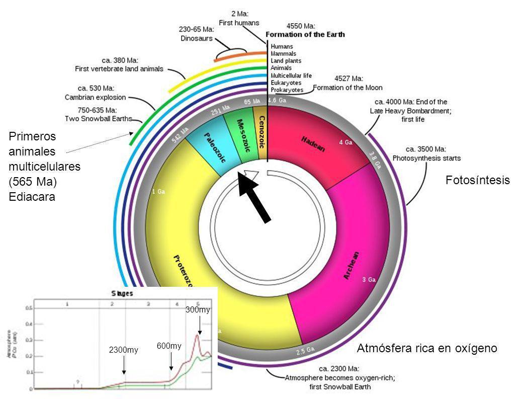 Primeros animales multicelulares