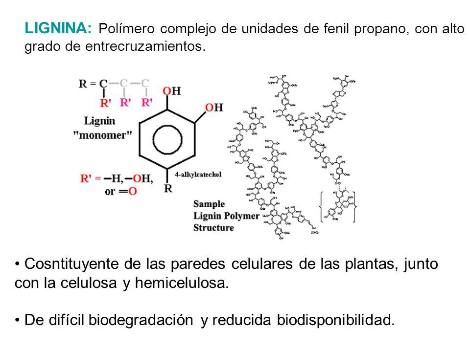 LIGNINA: Polímero complejo de unidades de fenil propano, con alto grado de entrecruzamientos.
