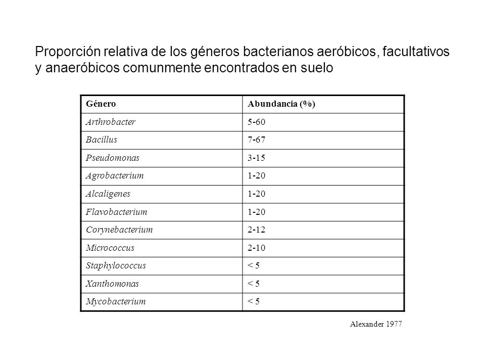 Proporción relativa de los géneros bacterianos aeróbicos, facultativos y anaeróbicos comunmente encontrados en suelo