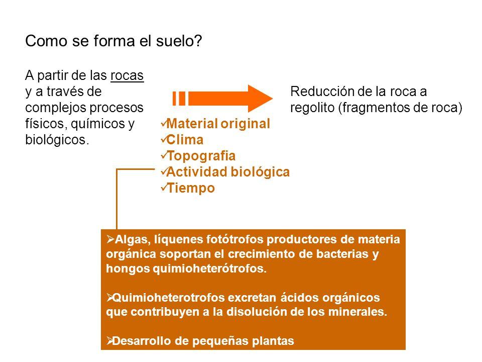 Habitat terrestre rocas y suelo y los sedimentos ppt for Como se forma y desarrolla el suelo