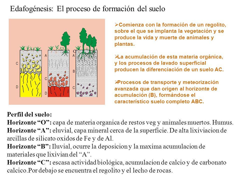 Edafogénesis: El proceso de formación del suelo