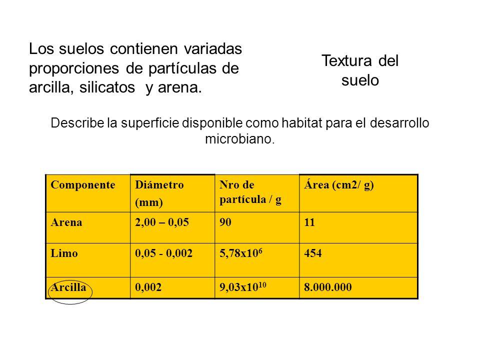 Los suelos contienen variadas proporciones de partículas de arcilla, silicatos y arena.