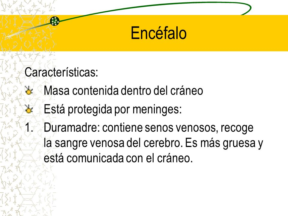 Encéfalo Características: Masa contenida dentro del cráneo
