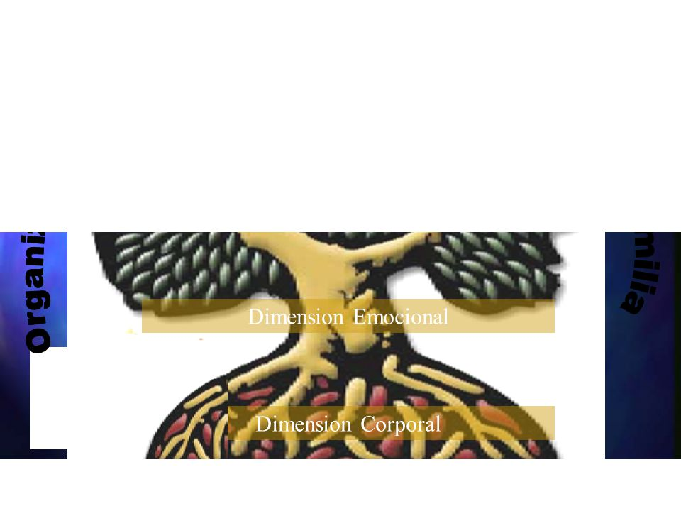 Organización Familia Sociedad Dimension Po-Etica Dimension Mental