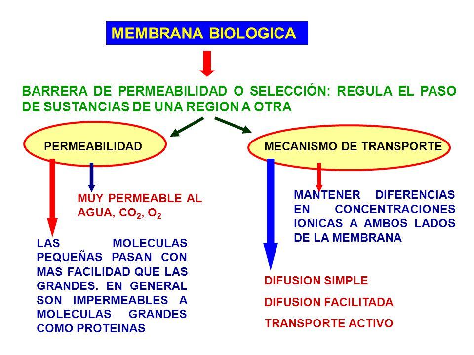 MEMBRANA BIOLOGICA BARRERA DE PERMEABILIDAD O SELECCIÓN: REGULA EL PASO DE SUSTANCIAS DE UNA REGION A OTRA.