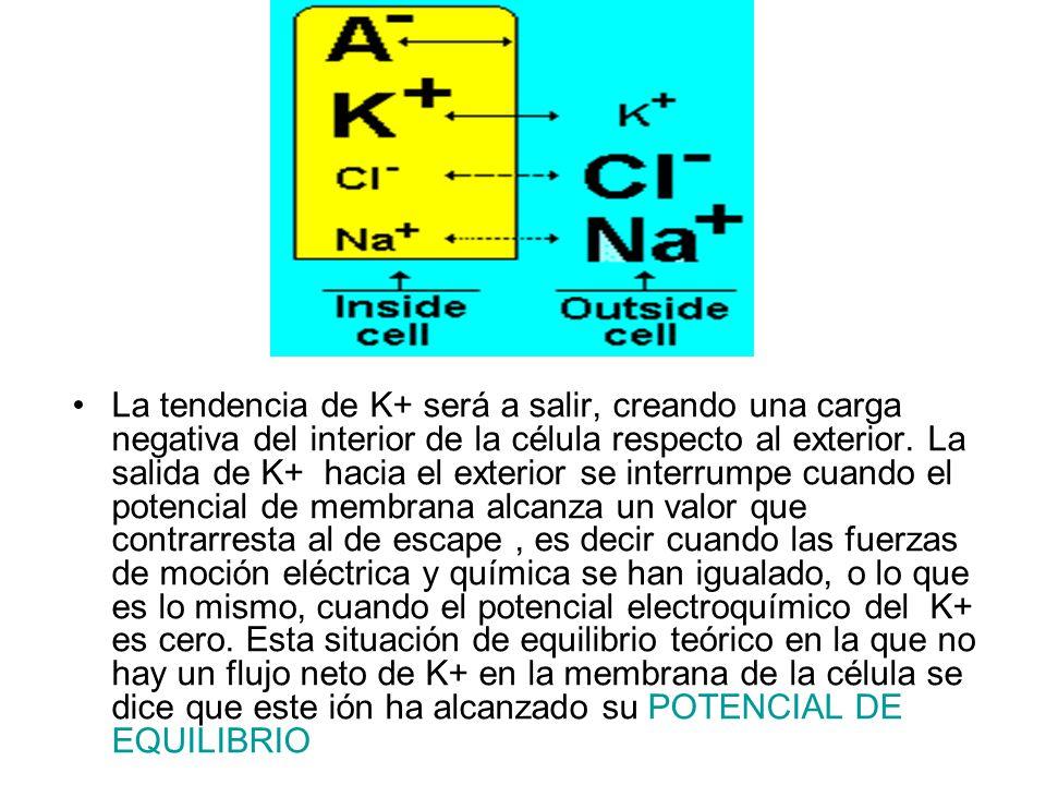La tendencia de K+ será a salir, creando una carga negativa del interior de la célula respecto al exterior. La salida de K+ hacia el exterior se interrumpe cuando el potencial de membrana alcanza un valor que contrarresta al de escape , es decir cuando las fuerzas de moción eléctrica y química se han igualado, o lo que es lo mismo, cuando el potencial electroquímico del K+ es cero. Esta situación de equilibrio teórico en la que no hay un flujo neto de K+ en la membrana de la célula se dice que este ión ha alcanzado su POTENCIAL DE EQUILIBRIO