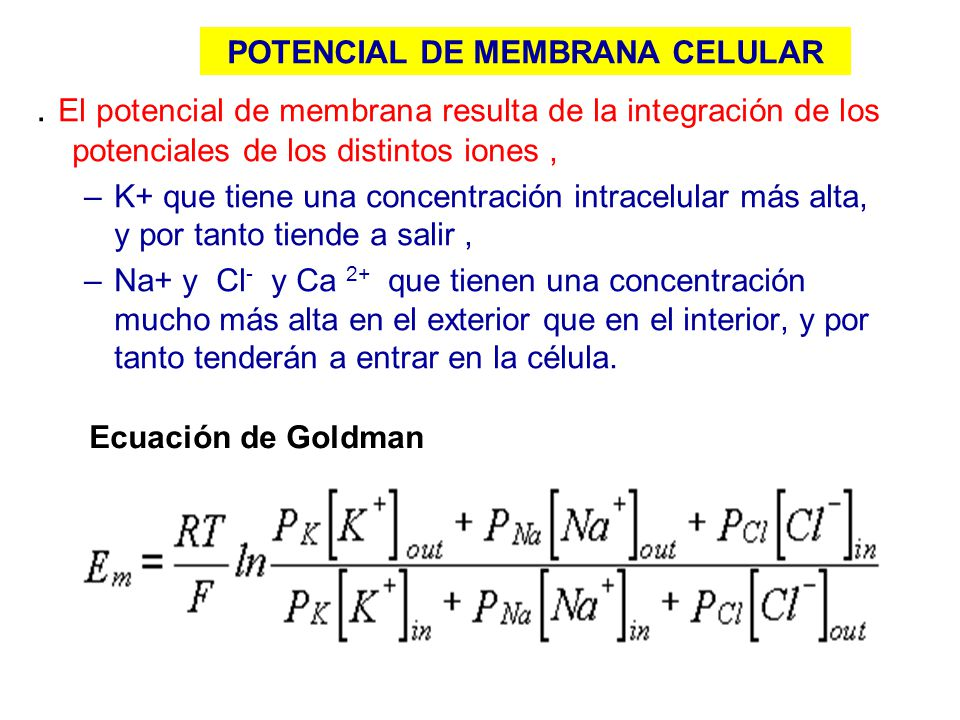 POTENCIAL DE MEMBRANA CELULAR
