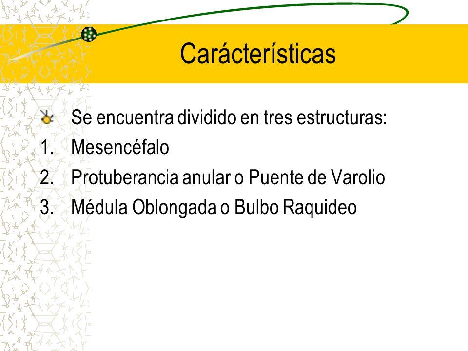 Carácterísticas Se encuentra dividido en tres estructuras: Mesencéfalo