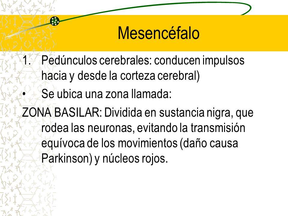 Mesencéfalo Pedúnculos cerebrales: conducen impulsos hacia y desde la corteza cerebral) Se ubica una zona llamada: