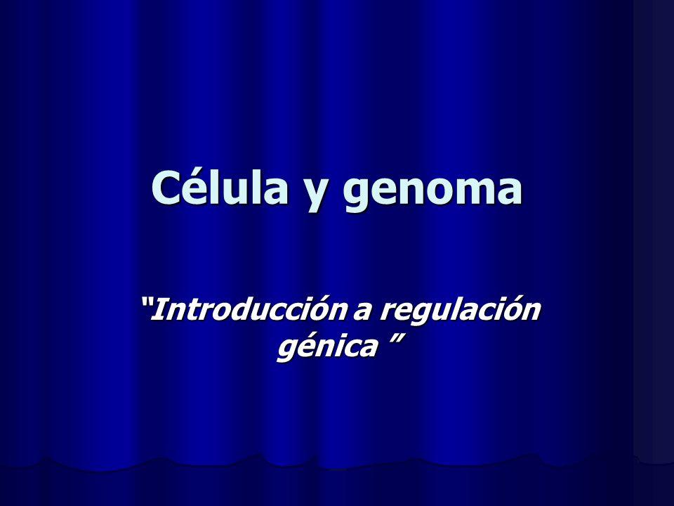 Introducción a regulación génica