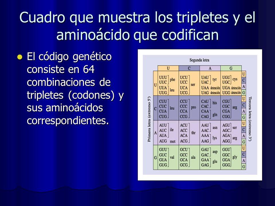 Cuadro que muestra los tripletes y el aminoácido que codifican