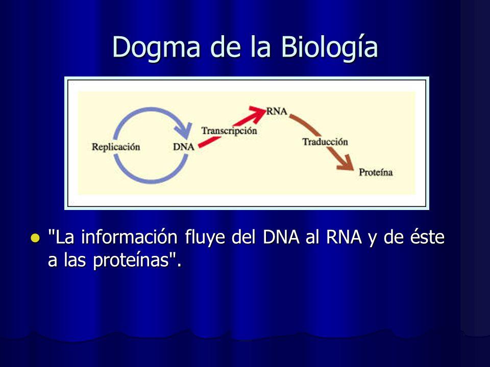 Dogma de la Biología La información fluye del DNA al RNA y de éste a las proteínas .