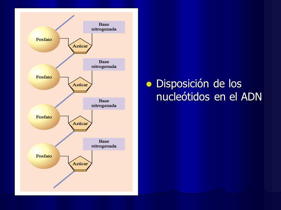 Disposición de los nucleótidos en el ADN