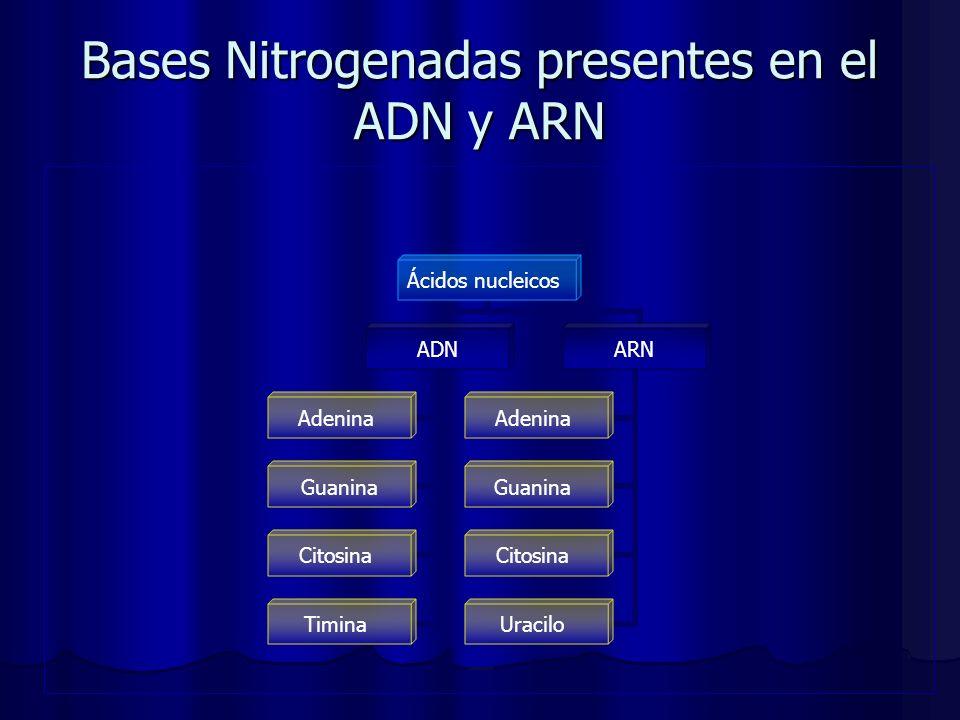 Bases Nitrogenadas presentes en el ADN y ARN