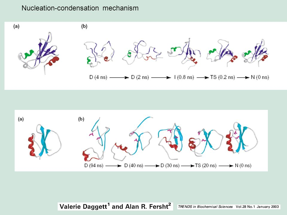 Nucleation-condensation mechanism