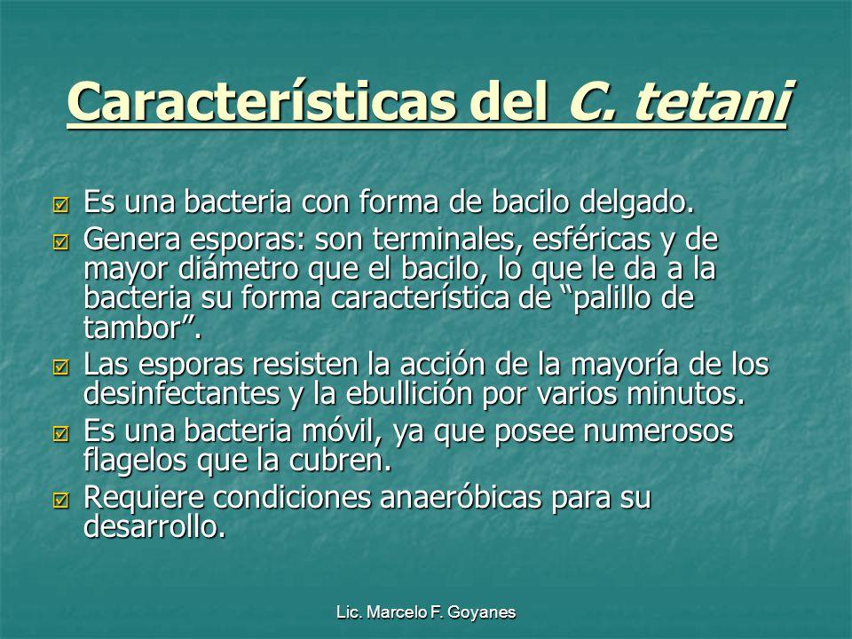 Características del C. tetani