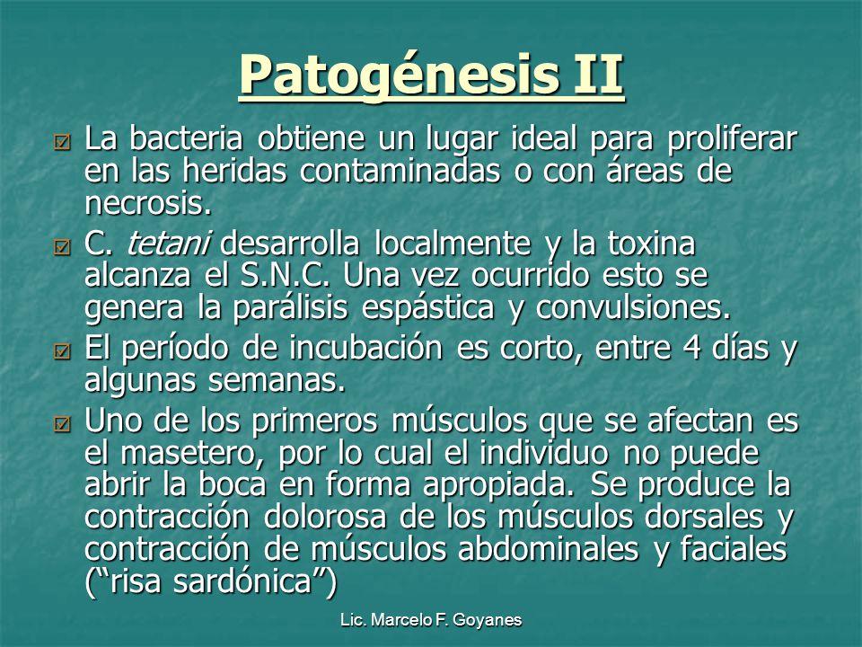 Patogénesis II La bacteria obtiene un lugar ideal para proliferar en las heridas contaminadas o con áreas de necrosis.