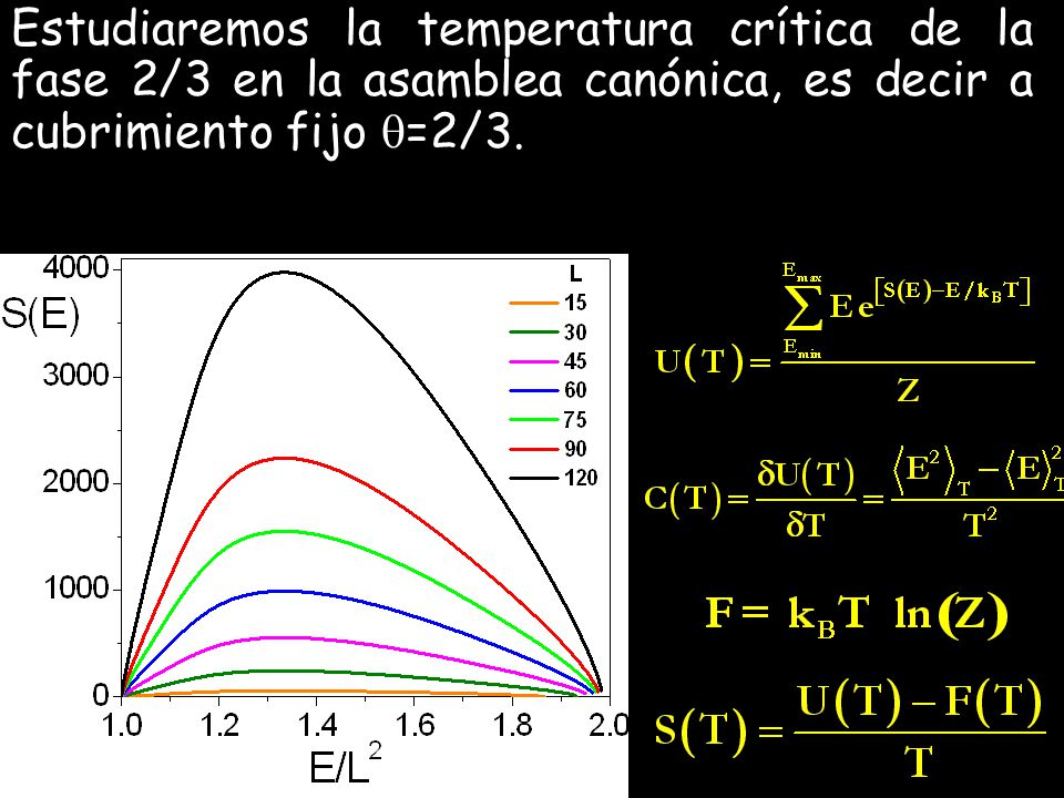 Estudiaremos la temperatura crítica de la fase 2/3 en la asamblea canónica, es decir a cubrimiento fijo =2/3.