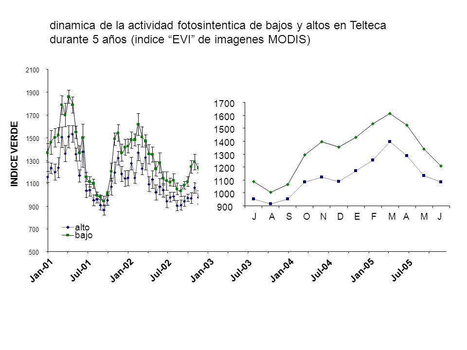dinamica de la actividad fotosintentica de bajos y altos en Telteca