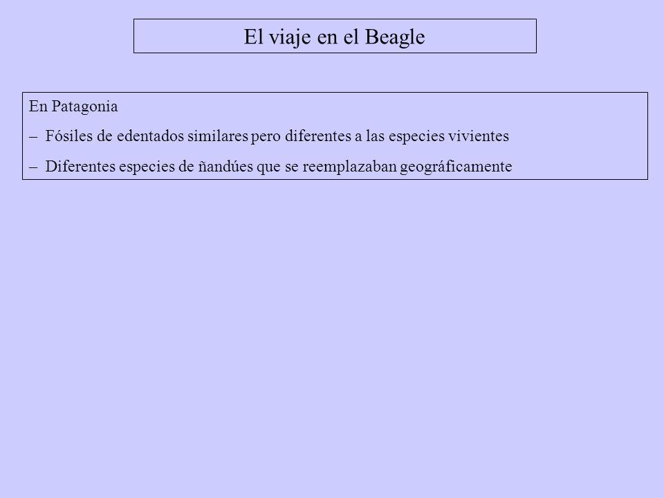 El viaje en el Beagle En Patagonia