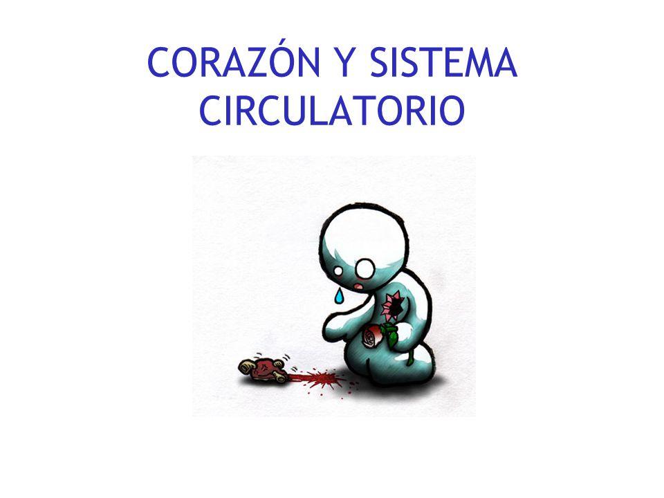 CORAZÓN Y SISTEMA CIRCULATORIO