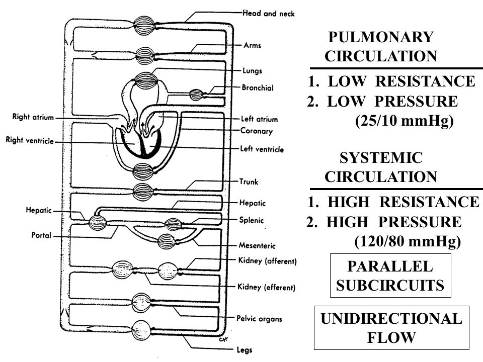 PULMONARY CIRCULATION. 1. LOW RESISTANCE. 2. LOW PRESSURE. (25/10 mmHg) SYSTEMIC. CIRCULATION.