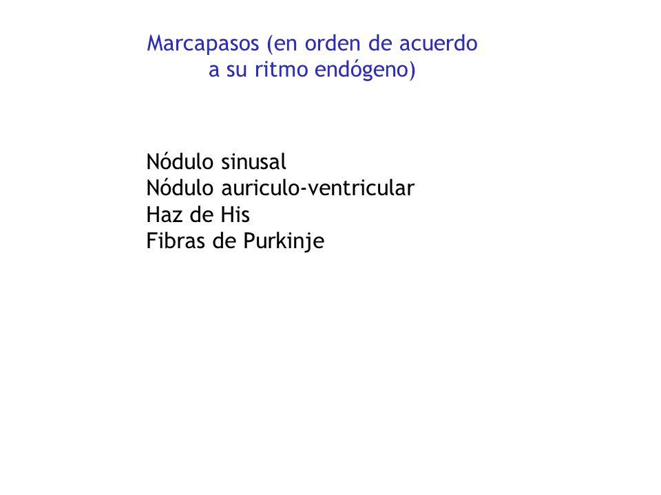 Marcapasos (en orden de acuerdo a su ritmo endógeno)