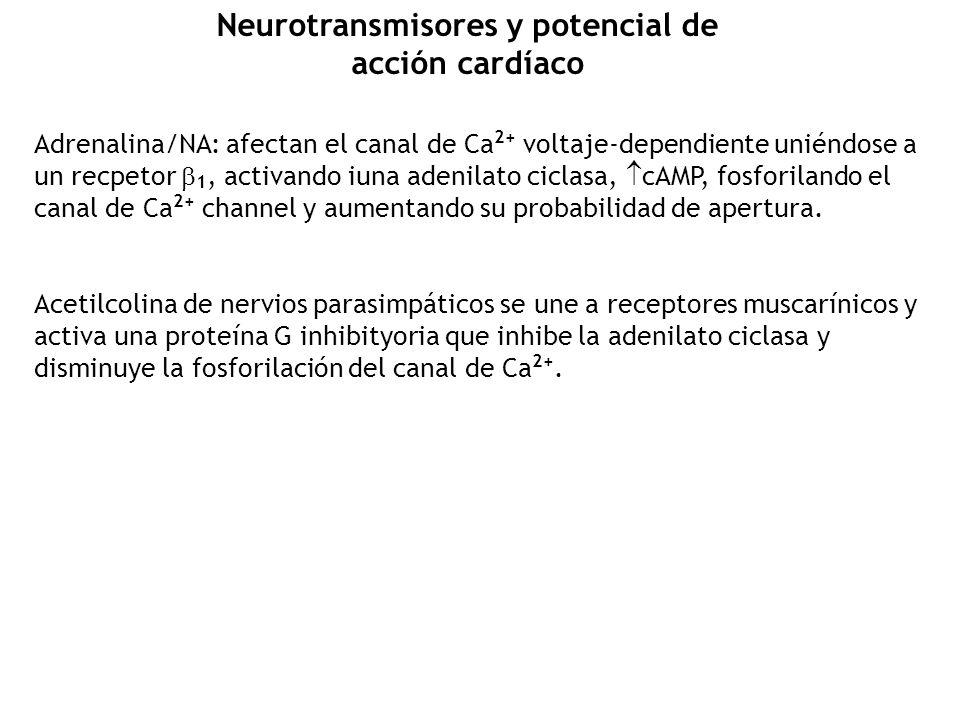 Neurotransmisores y potencial de acción cardíaco