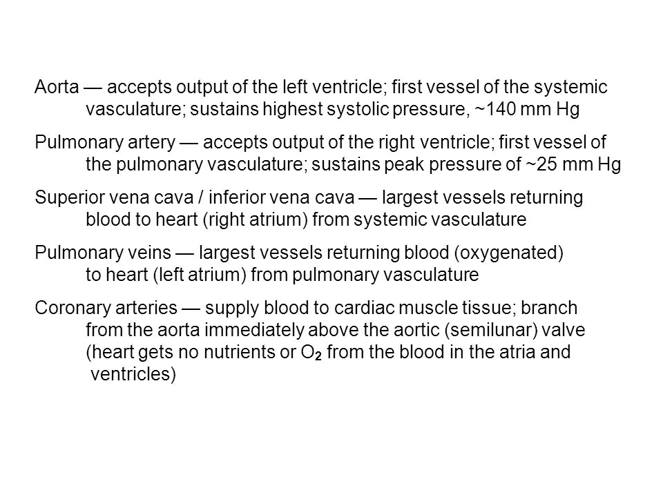 Aorta — accepts output of the left ventricle; first vessel of the systemic