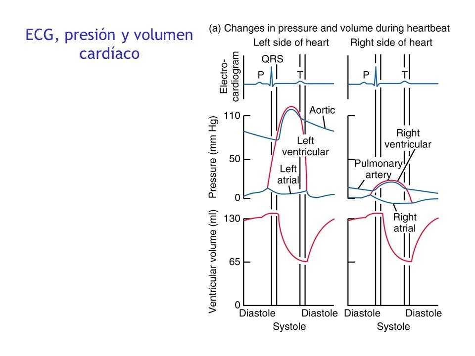 ECG, presión y volumen cardíaco