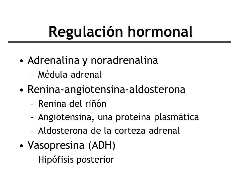 Regulación hormonal Adrenalina y noradrenalina