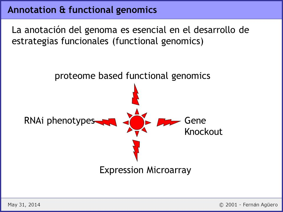 Annotation & functional genomics
