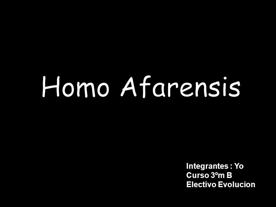 Homo Afarensis Integrantes : Yo Curso 3ºm B Electivo Evolucion