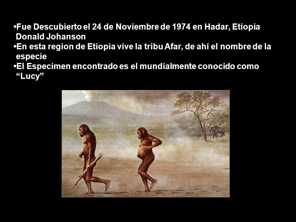 •Fue Descubierto el 24 de Noviembre de 1974 en Hadar, Etiopia Donald Johanson •En esta region de Etiopia vive la tribu Afar, de ahí el nombre de la .especie •El Especimen encontrado es el mundialmente conocido como . Lucy