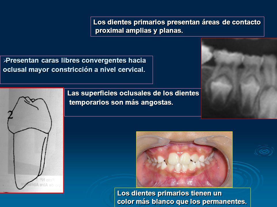 Los dientes primarios presentan áreas de contacto